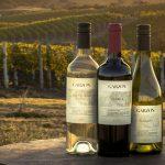 Tres de los más destacados vinos de Uruguay