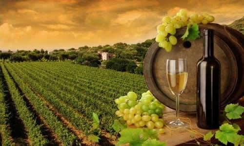 vinos B