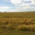 Información útil sobre el alquiler de casas en Carrasco Montevideo